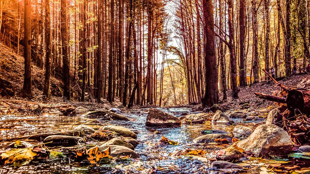 escursione parco nazionali foreste casentinesi